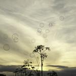 Storia delle bolle