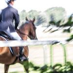 La passion des chevaux