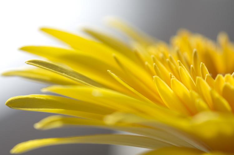 Portrait de germini jaune